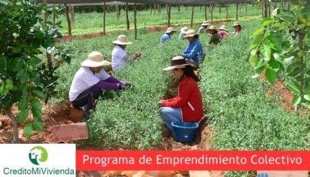 https://creditomicasaya.online/programa-de-emprendimiento-colectivo/